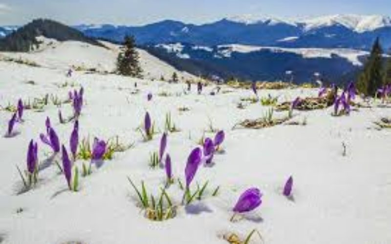 Flowers That Thrive In Mountain Climates