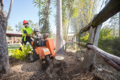 Enjoy the Advantages of the Stump Grinding Aurora
